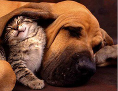 doggie and kitty
